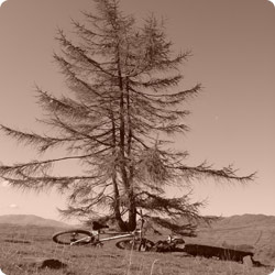 Photo of Bike and Tree in Sepia